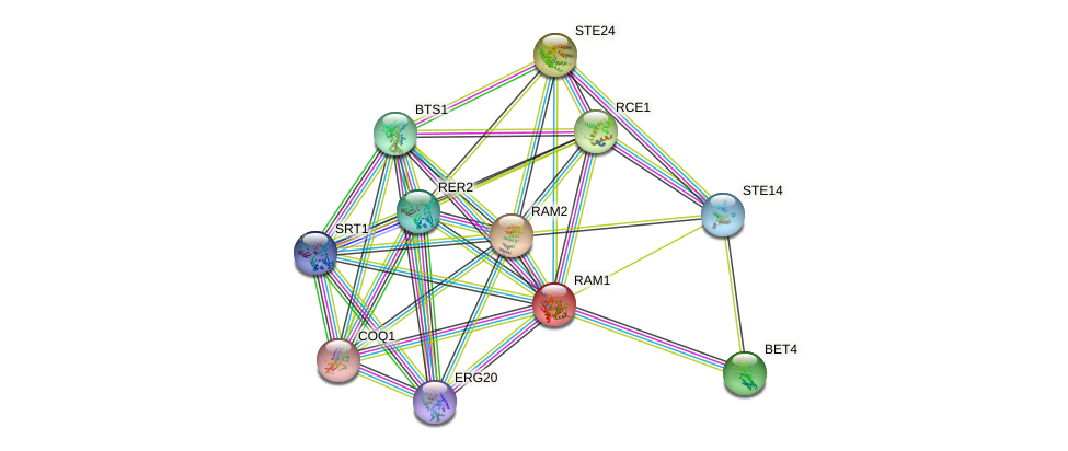 RAM1 protein (Saccharomyces cerevisiae) - STRING interaction network