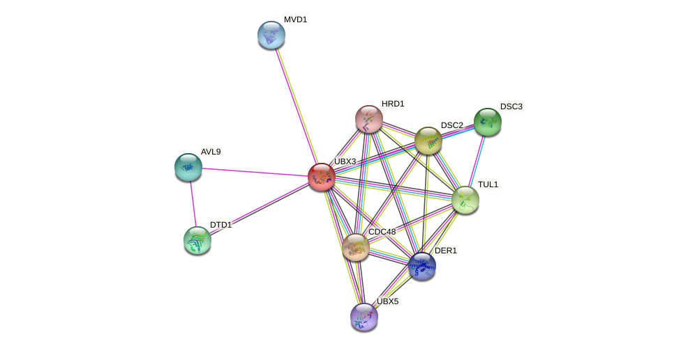UBX3 protein (Saccharomyces cerevisiae) - STRING interaction network