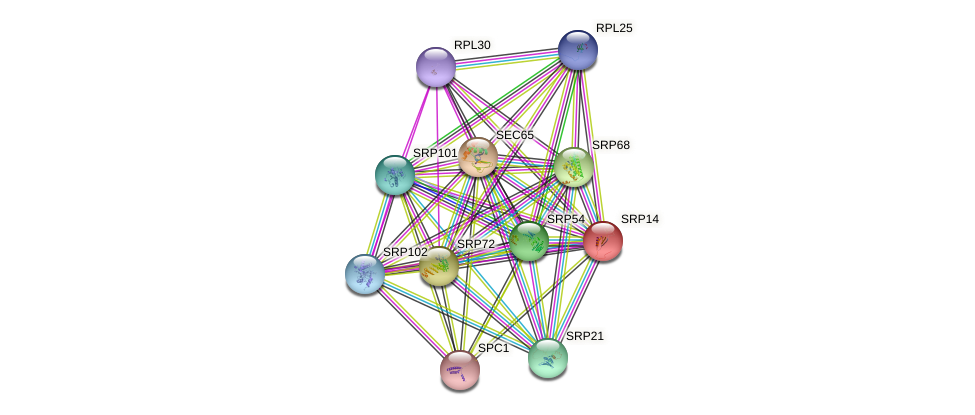 SRP14 protein (Saccharomyces cerevisiae) - STRING interaction network