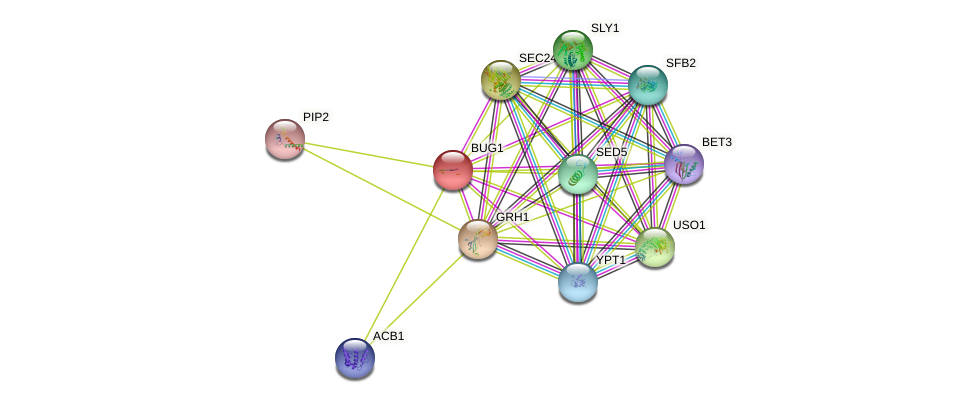 BUG1 protein (Saccharomyces cerevisiae) - STRING interaction network