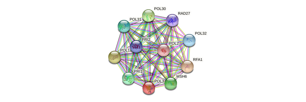 POL3 protein (Saccharomyces cerevisiae) - STRING interaction network