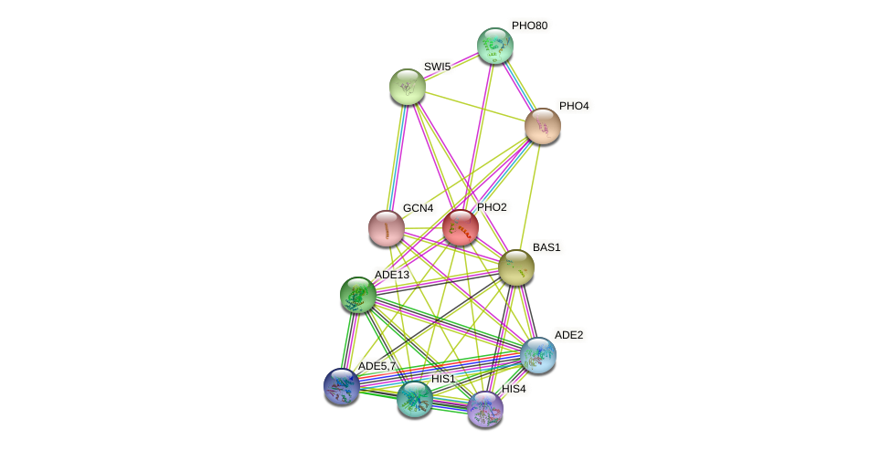 PHO2 protein (Saccharomyces cerevisiae) - STRING interaction network