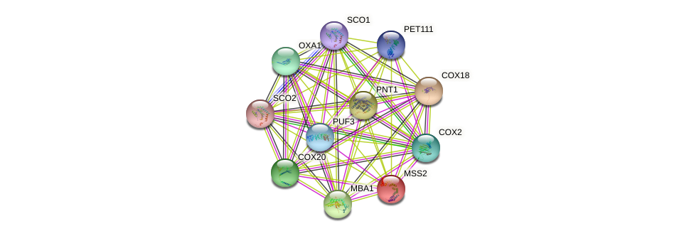 MSS2 protein (Saccharomyces cerevisiae) - STRING interaction network