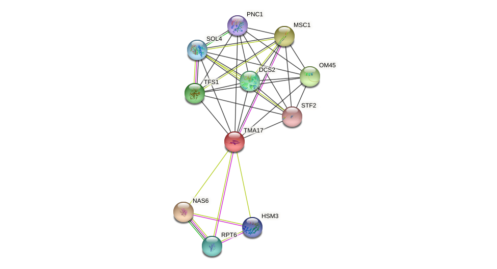 TMA17 protein (Saccharomyces cerevisiae) - STRING interaction network