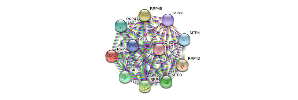 RRP42 protein (Saccharomyces cerevisiae) - STRING interaction network
