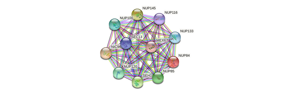 NUP84 protein (Saccharomyces cerevisiae) - STRING interaction network