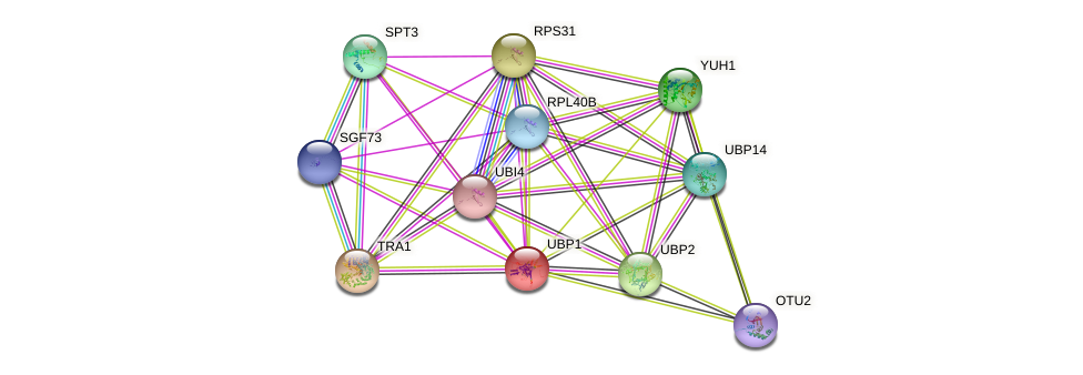 UBP1 protein (Saccharomyces cerevisiae) - STRING interaction network