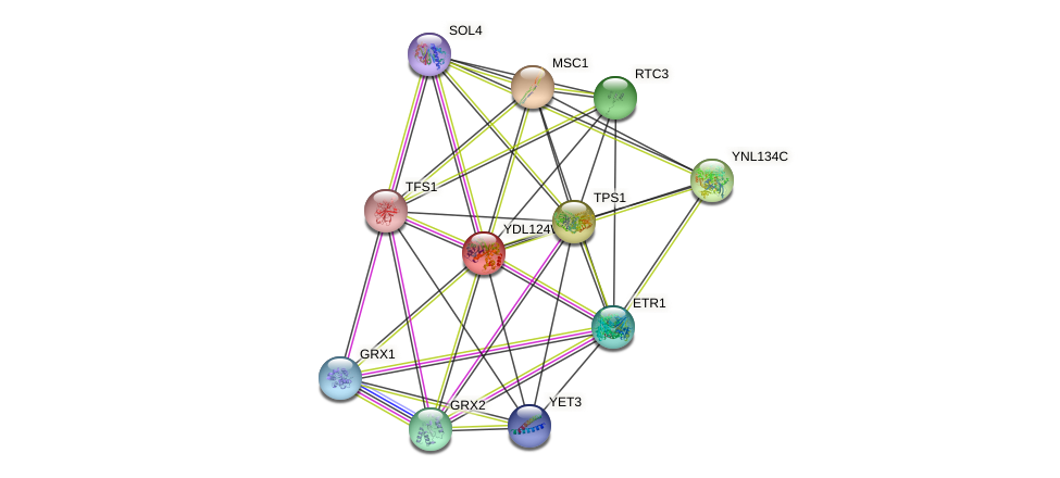YDL124W protein (Saccharomyces cerevisiae) - STRING interaction network