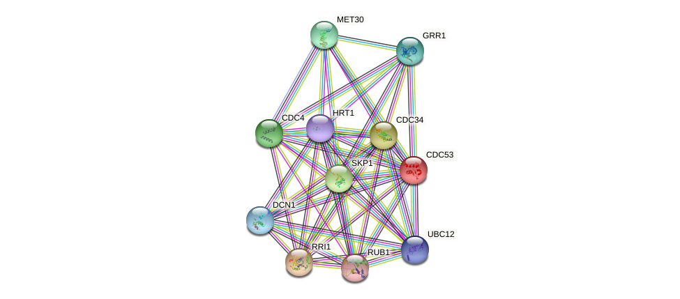 CDC53 protein (Saccharomyces cerevisiae) - STRING interaction network