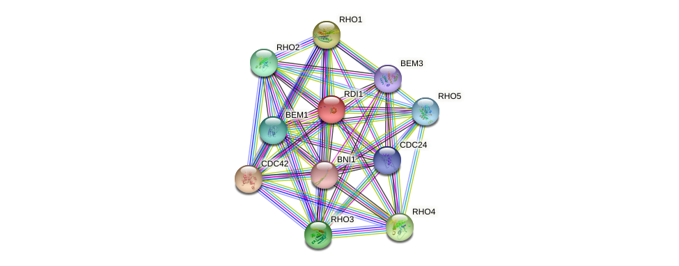 RDI1 protein (Saccharomyces cerevisiae) - STRING interaction network