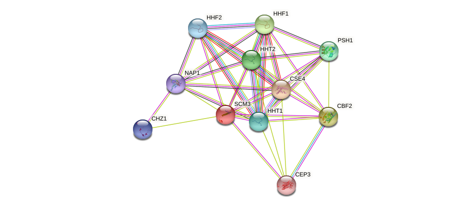 SCM3 protein (Saccharomyces cerevisiae) - STRING interaction network
