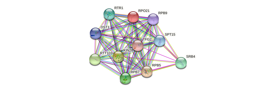 RPO21 protein (Saccharomyces cerevisiae) - STRING interaction network