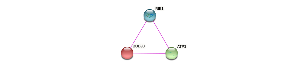 BUD30 protein (Saccharomyces cerevisiae) - STRING interaction network