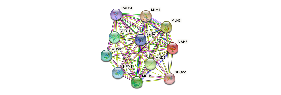 MSH5 protein (Saccharomyces cerevisiae) - STRING interaction network