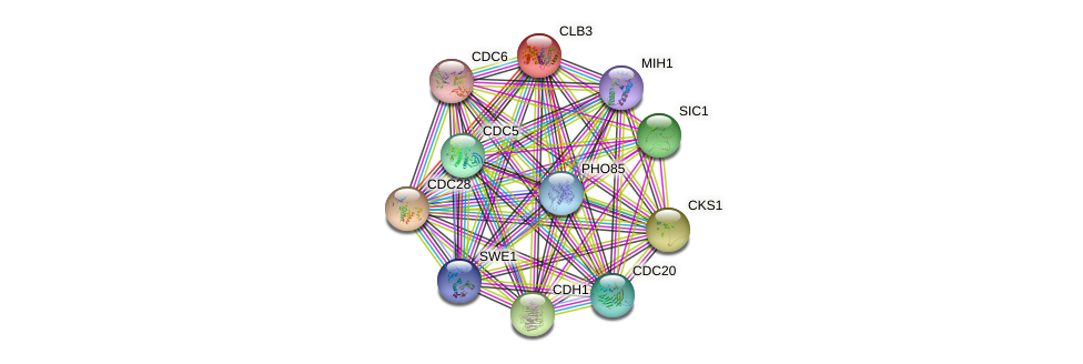 CLB3 protein (Saccharomyces cerevisiae) - STRING interaction network