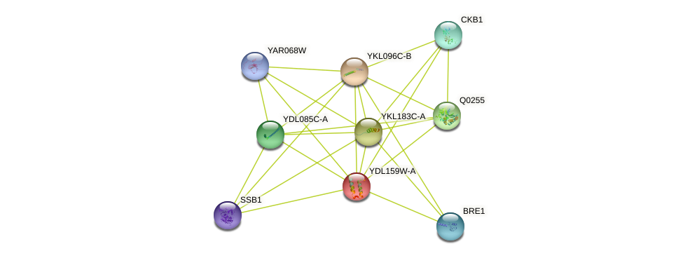 YDL159W-A protein (Saccharomyces cerevisiae) - STRING interaction network