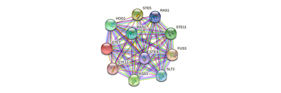 STE7 protein (Saccharomyces cerevisiae) - STRING interaction network