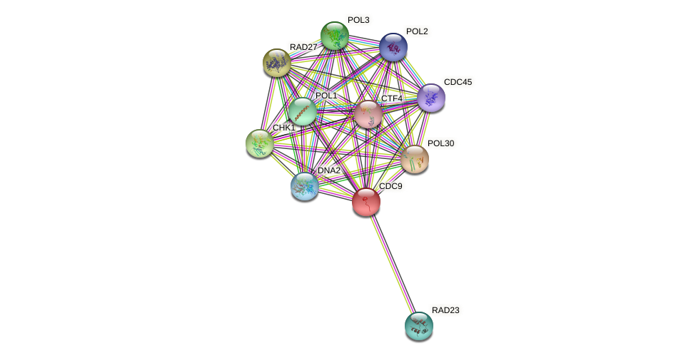 CDC9 protein (Saccharomyces cerevisiae) - STRING interaction network