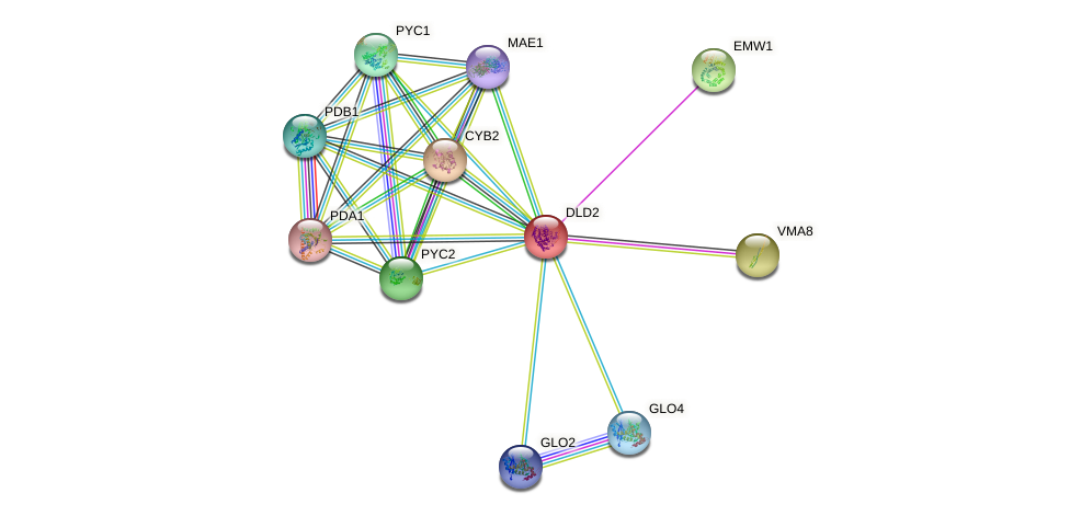 DLD2 protein (Saccharomyces cerevisiae) - STRING interaction network
