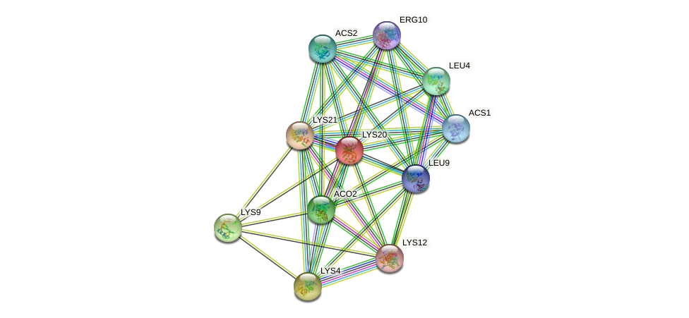 LYS20 protein (Saccharomyces cerevisiae) - STRING interaction network