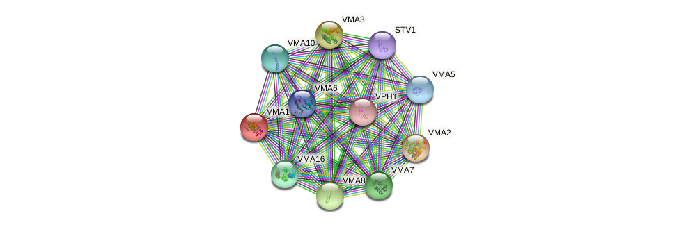 VMA1 protein (Saccharomyces cerevisiae) - STRING interaction network