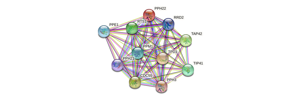 PPH22 protein (Saccharomyces cerevisiae) - STRING interaction network