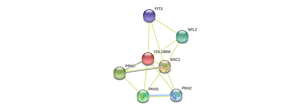 YDL196W protein (Saccharomyces cerevisiae) - STRING interaction network