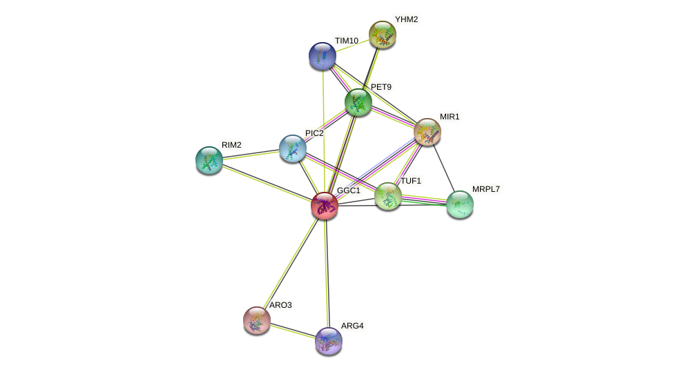GGC1 protein (Saccharomyces cerevisiae) - STRING interaction network