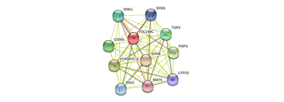 YDL199C protein (Saccharomyces cerevisiae) - STRING interaction network