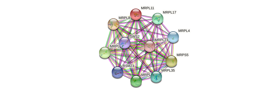 MRPL11 protein (Saccharomyces cerevisiae) - STRING interaction network
