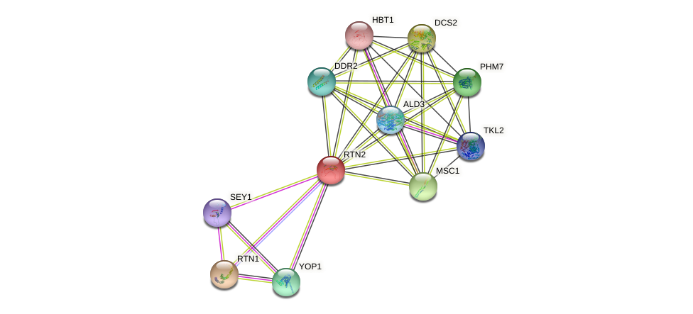RTN2 protein (Saccharomyces cerevisiae) - STRING interaction network