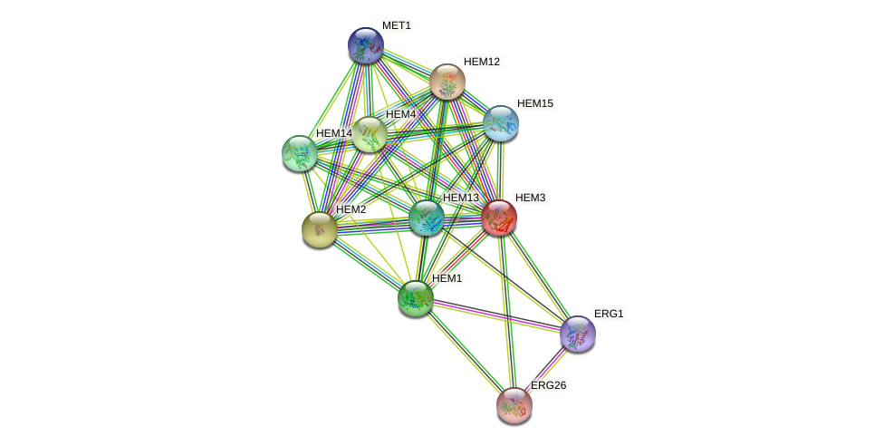 HEM3 protein (Saccharomyces cerevisiae) - STRING interaction network