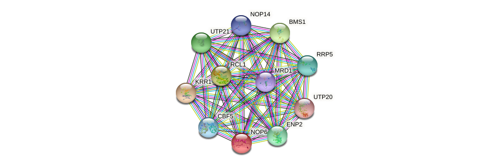 NOP6 protein (Saccharomyces cerevisiae) - STRING interaction network