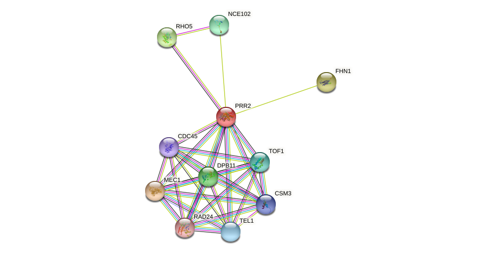 PRR2 protein (Saccharomyces cerevisiae) - STRING interaction network