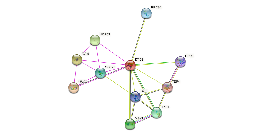 DTD1 protein (Saccharomyces cerevisiae) - STRING interaction network