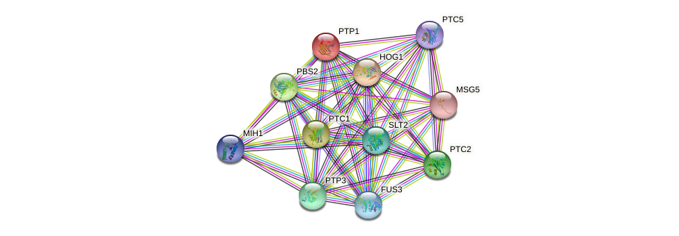 PTP1 protein (Saccharomyces cerevisiae) - STRING interaction network