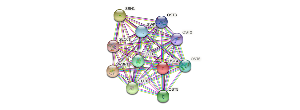 OST4 protein (Saccharomyces cerevisiae) - STRING interaction network