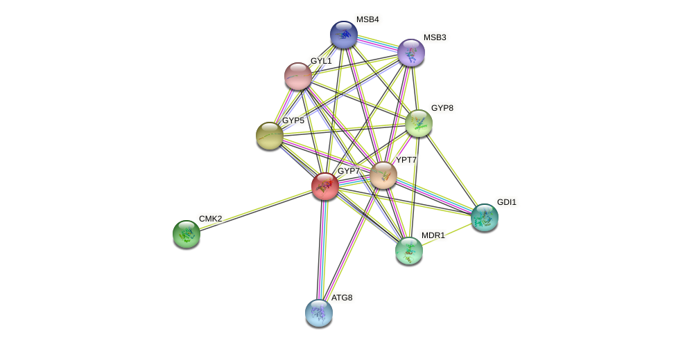 GYP7 protein (Saccharomyces cerevisiae) - STRING interaction network