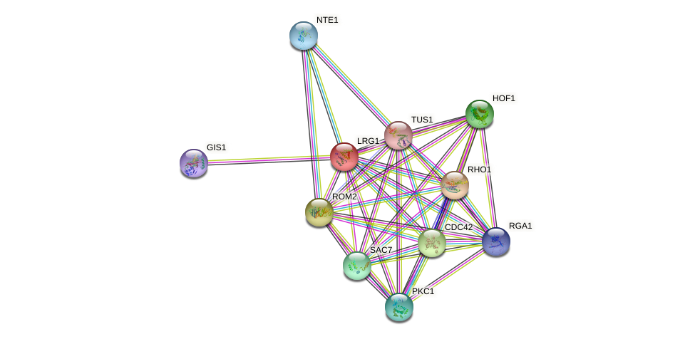 LRG1 protein (Saccharomyces cerevisiae) - STRING interaction network