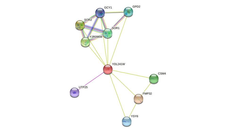 YDL241W protein (Saccharomyces cerevisiae) - STRING interaction network