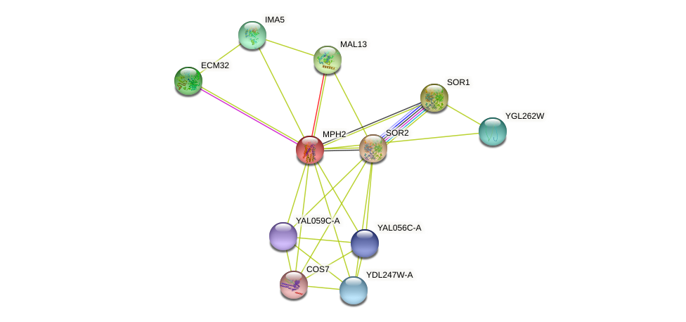 MPH2 protein (Saccharomyces cerevisiae) - STRING interaction network