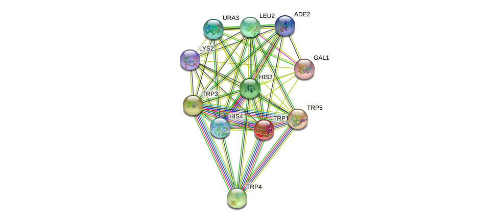 TRP1 protein (Saccharomyces cerevisiae) - STRING interaction network