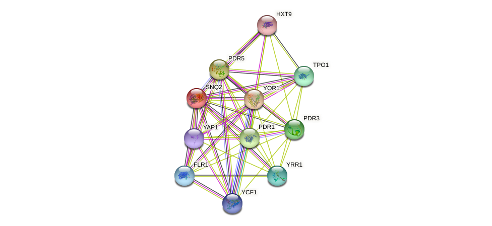SNQ2 protein (Saccharomyces cerevisiae) - STRING interaction network