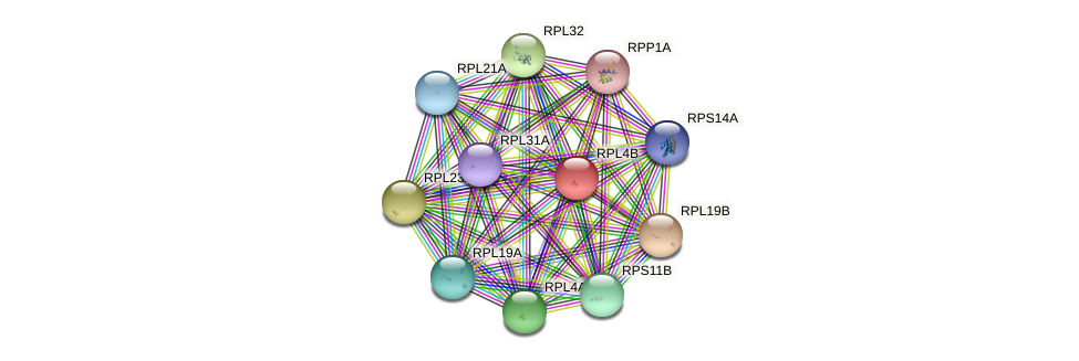 RPL4B protein (Saccharomyces cerevisiae) - STRING interaction network