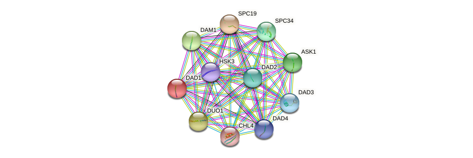DAD1 protein (Saccharomyces cerevisiae) - STRING interaction network