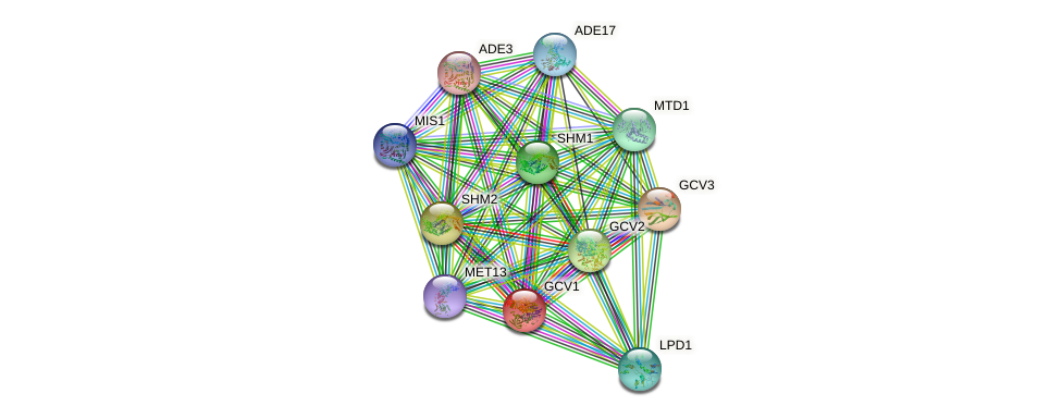GCV1 protein (Saccharomyces cerevisiae) - STRING interaction network