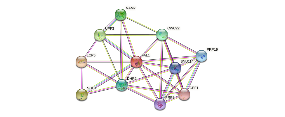FAL1 protein (Saccharomyces cerevisiae) - STRING interaction network