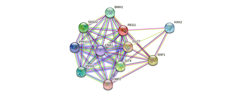 REG1 protein (Saccharomyces cerevisiae) - STRING interaction network