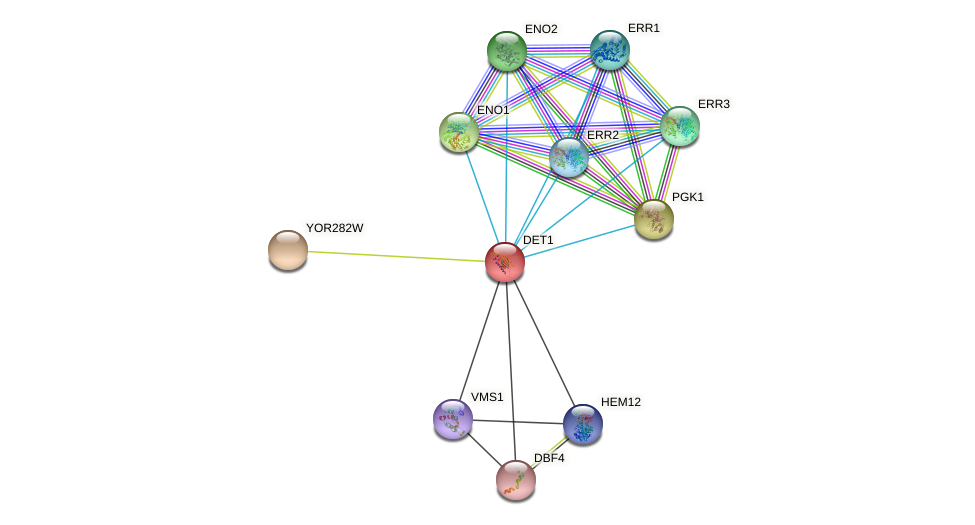 DET1 protein (Saccharomyces cerevisiae) - STRING interaction network