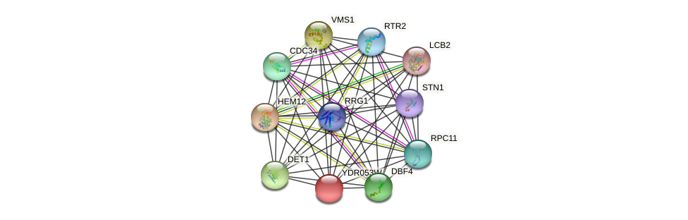 YDR053W protein (Saccharomyces cerevisiae) - STRING interaction network